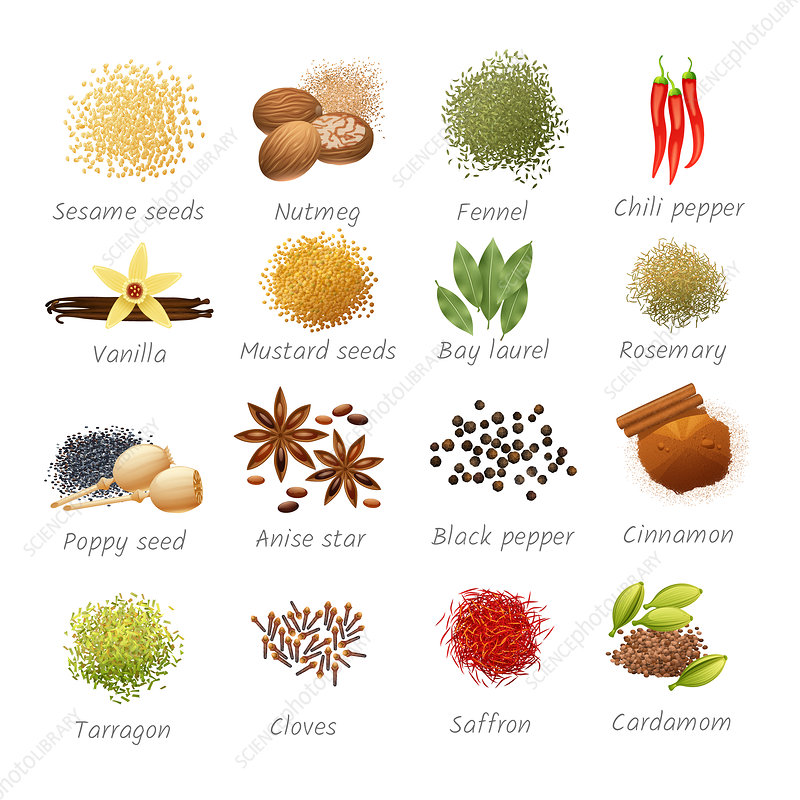Herbs and spices, illustration