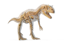 Allosaurus dinosaur skeleton, illustration