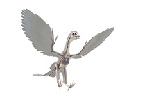 Archaeopteryx skeleton, illustration
