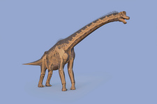 Brachiosaurus dinosaur, illustration