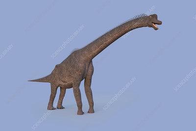 Brachiosaurus dinosaur, illustration
