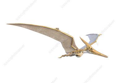 Pteranodon skeleton, illustration