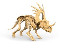Styracosaurus dinosaur skeleton, illustration