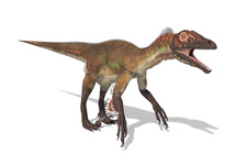 Utahraptor dinosaur, illustration