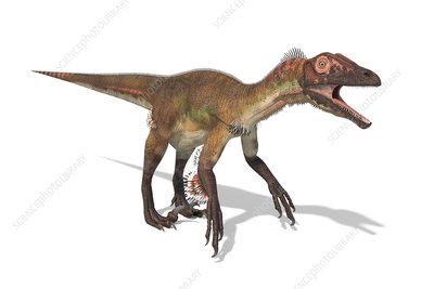 Utahraptor dinosaur, illustration