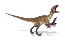 Utahraptor dinosaur skeleton, illustration