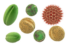 Pollen grains from different plants, illustration