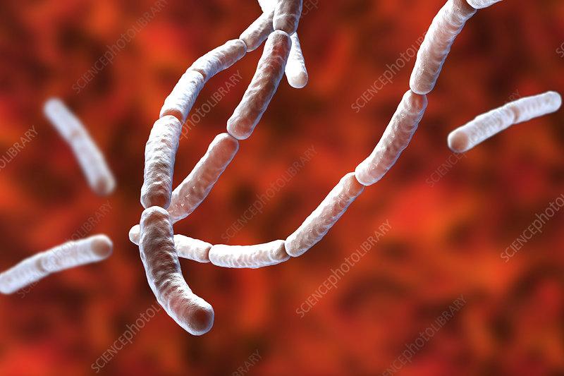 Bacillus subtilis bacteria, illustration