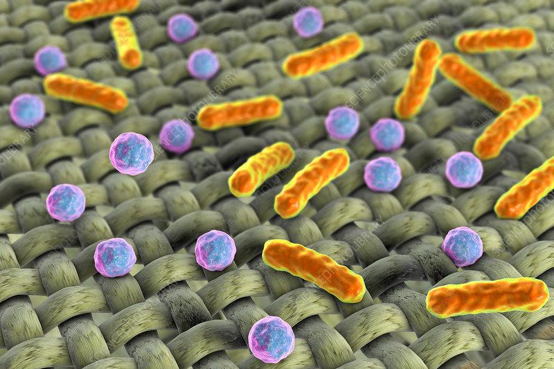 Bacteria on fabric surface, illustration