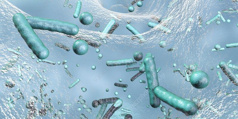 Bacteria in a biofilm, illustration