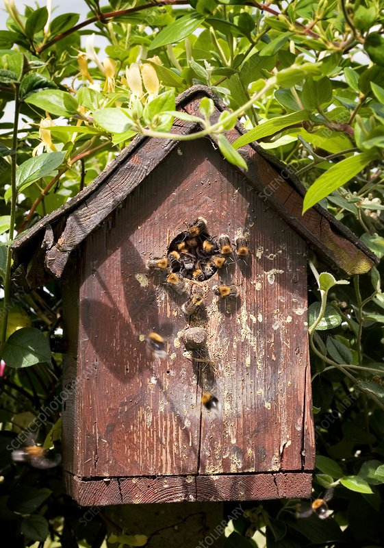 Bees in a wooden birdhouse, illustration