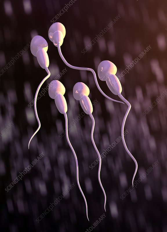 Human sperm, illustration