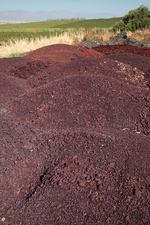 Grape skins being used as compost