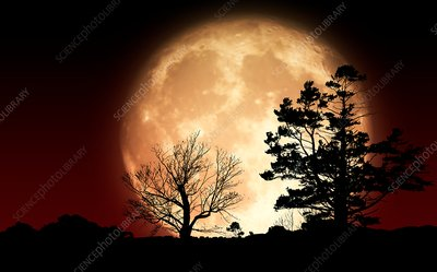 Supermoon behind trees, illustration
