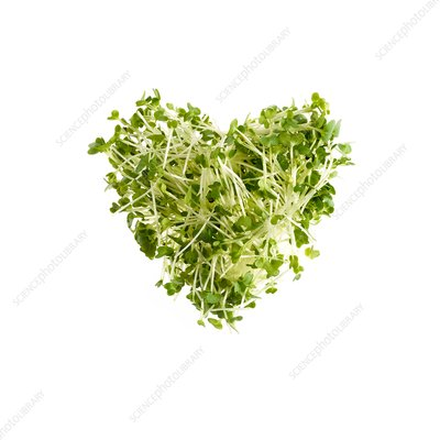 Sprouting cress, heart shaped