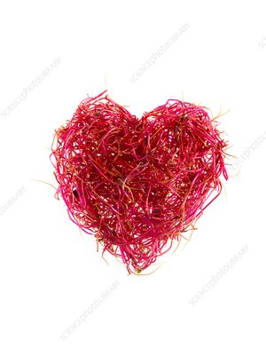 Sprouting beetroots, heart shaped