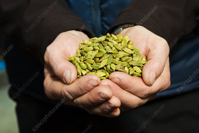 Cardamom pods flavour for craft beer