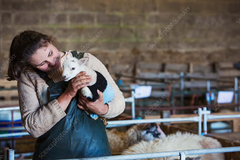 Woman with newborn lamb in knitted jumper