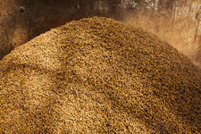 Spent grain used in the brewing process