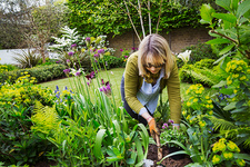 Woman with a trowel, digging in flowerbed