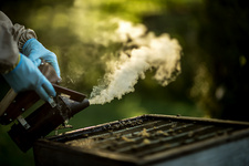 Beekeeper in gloves using a smoker