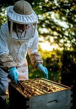 Beekeeper holding frame covered in bees