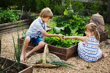 Boy and girl picking fresh vegetables