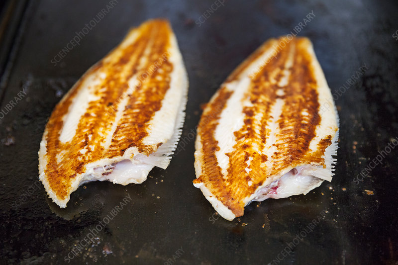Close up of two grilled fillets of fish