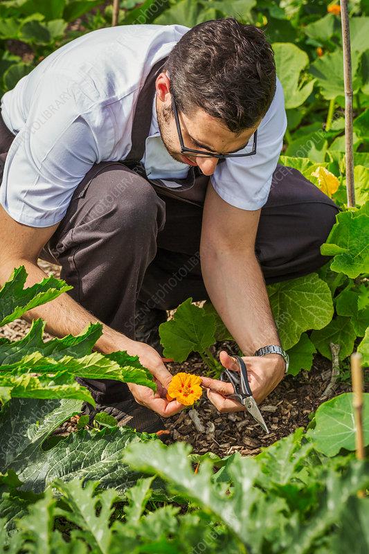 Man kneeling in a kitchen garden