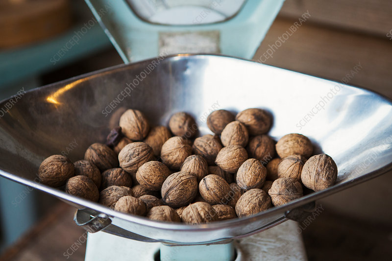 Walnuts on metal weighing scales