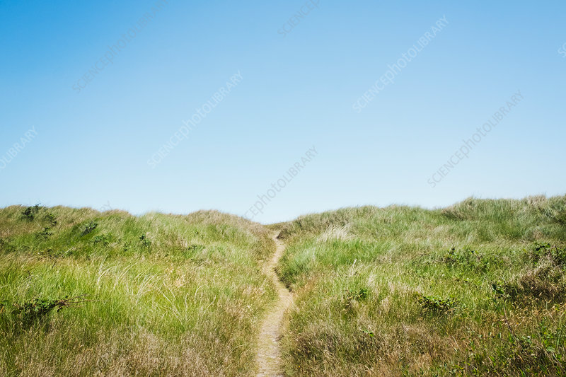 Footpath through sand dunes and blue sky
