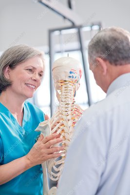 Female chiropractor showing anatomical model