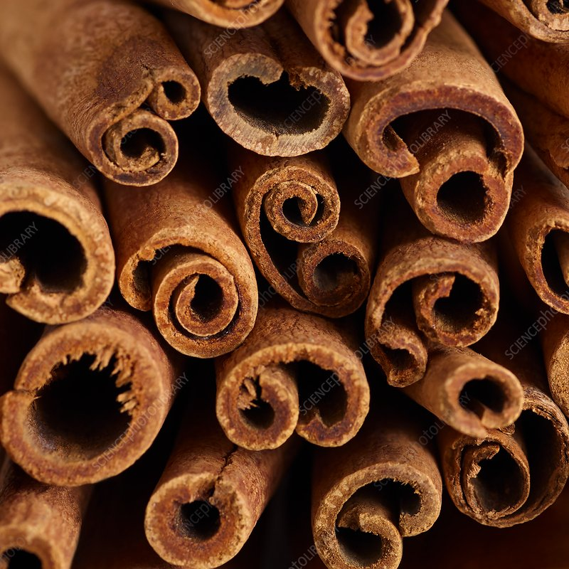 Cinnamon sticks in bundle