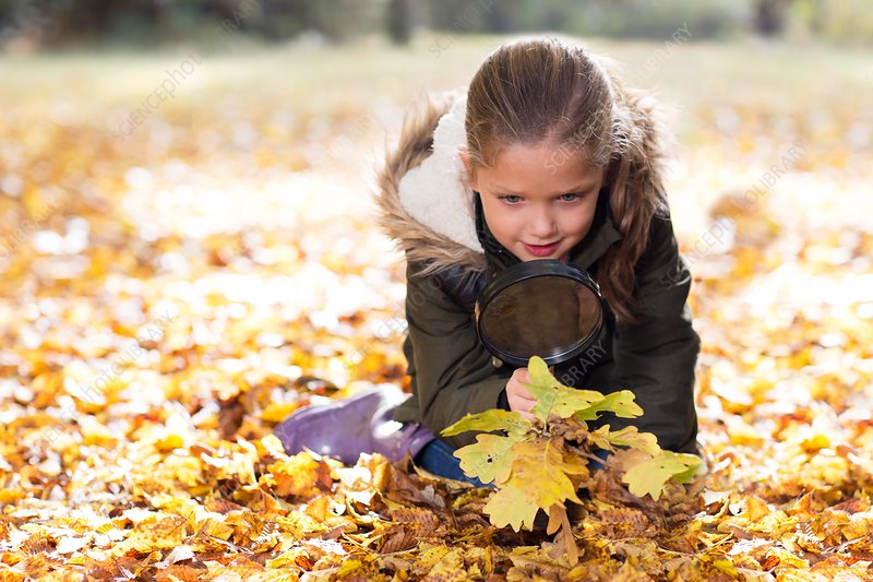 Young girl collecting Autumn leaves