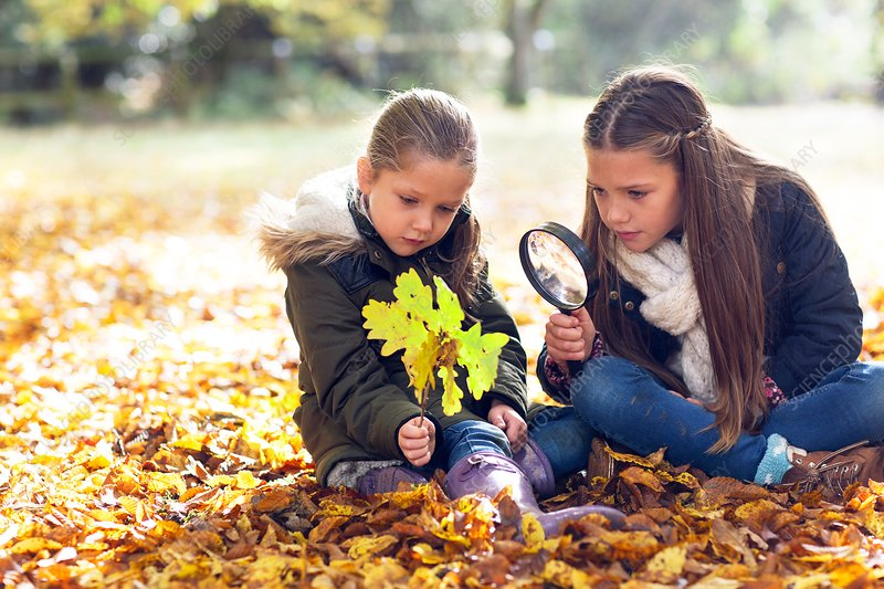 Girls collecting leaves