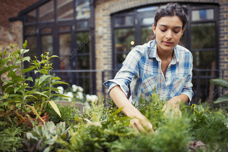 Young woman gardening, checking plants on patio