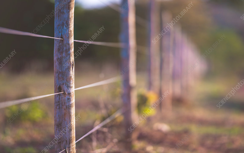 Wire fence with wooden posts