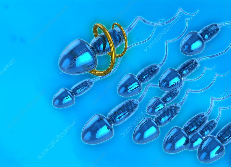 Nano sperm, illustration