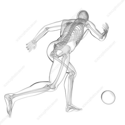 Person playing football, skeletal structure, illustration
