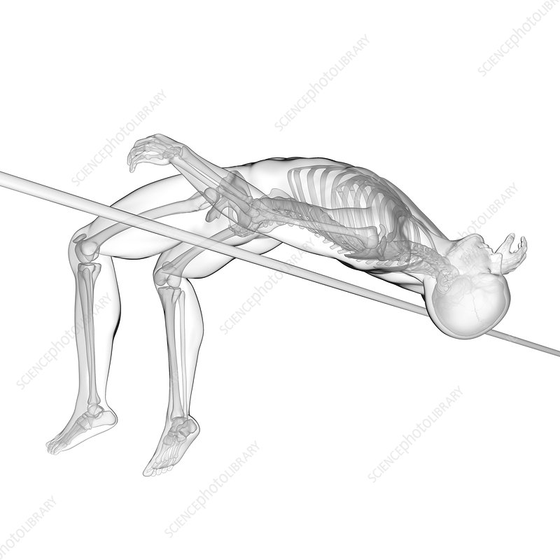 High jumper's skeletal system, illustration