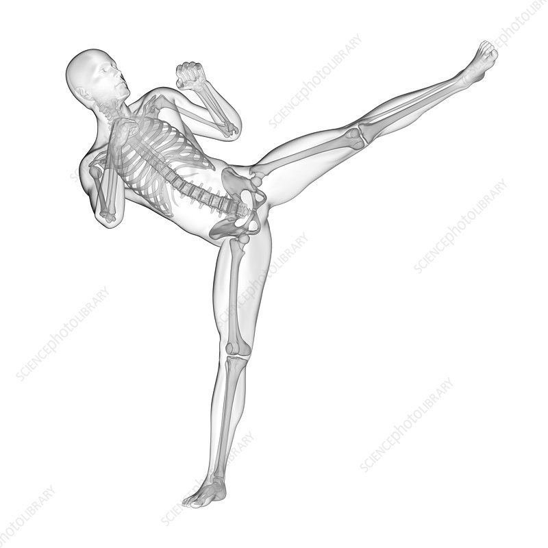 Person kick boxing, skeletal system, illustration
