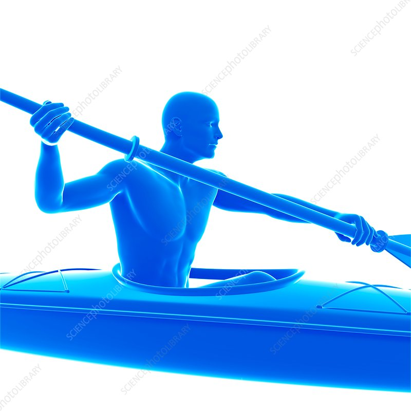 Person canoeing, illustration