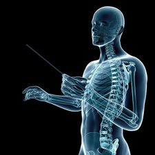 Skeletal system of a conductor, illustration