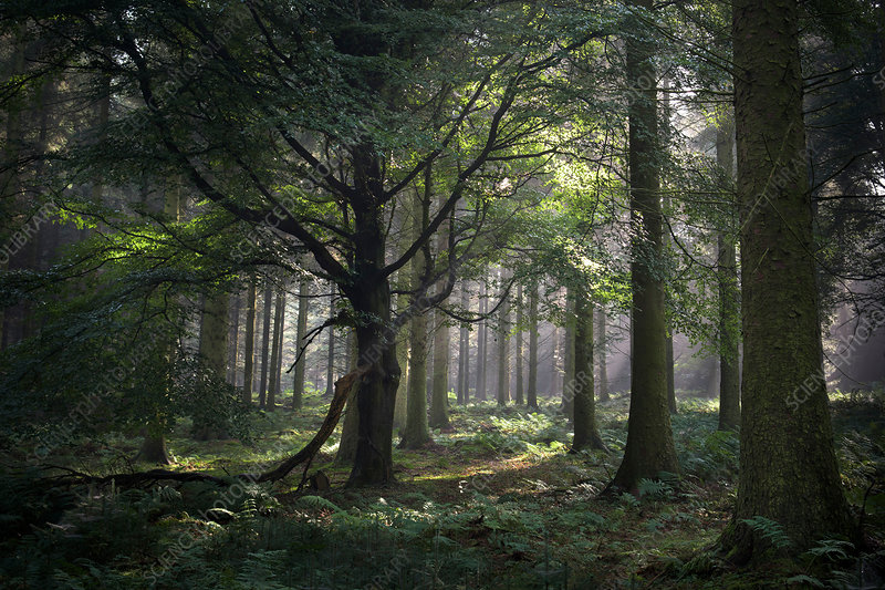 Forest, Beacon Edge, Penrith, The Lake District, UK