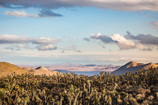 Landscape with cacti in Death Valley, USA
