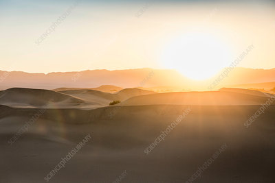 Sunlit Mesquite Flat Sand Dunes in Death Valley, USA
