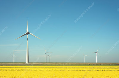 Wind turbines in field landscape of yellow flowers