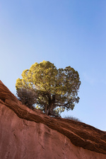 Rock formation with single tree, Escalante, Utah, USA