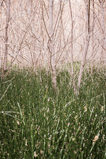 Long grass, Escalante, Utah, USA