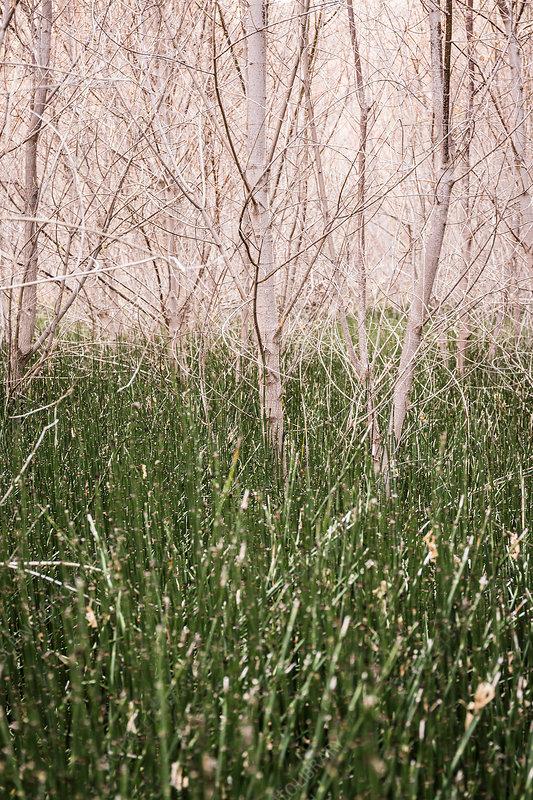 Long grass, Escalante, Utah, USA